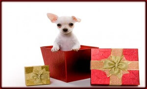 Puppy Standing Gift feature 300x182 A Gift