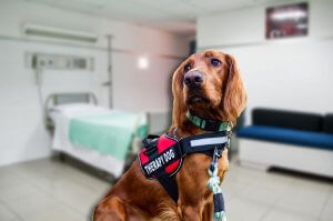 Breast Cancer Surgeries and Treatments and Therapy Dogs